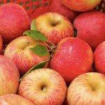 Яблочная брага