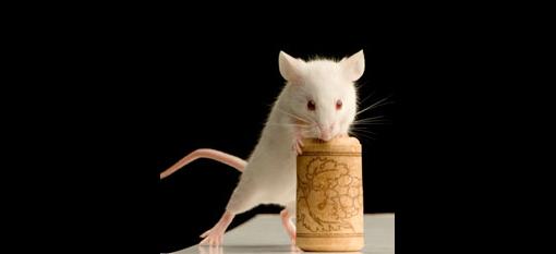 Мышиный привкус и другие болезни вина
